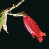 La flora de los bosques andinos de la cuenca alta del Magdalena ostenta una infinidad de formas y colores y está íntimamente relacionada con la fauna de la zona.