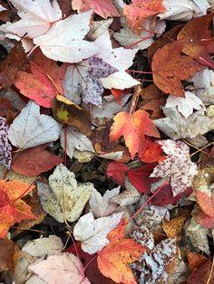 Fall Colors in Nevada City, CA : Nevada City Motel, Outside Inn