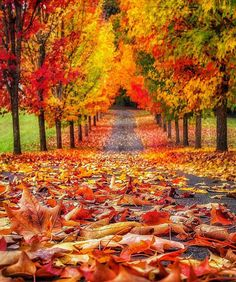 Fall in Oregon ✨🍁🍁🍁✨ . Picture by ✨✨ for a feature ❤️ - Wonderful Places ( Beautiful Places, Beautiful Pictures, Wonderful Places, Autumn Scenes, Seasons Of The Year, All Nature, Autumn Nature, Fall Pictures, Fall Season