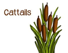 watercolor cattails clipart digital swamp images southern american rh pinterest com swamp clipart free swamp animals clipart
