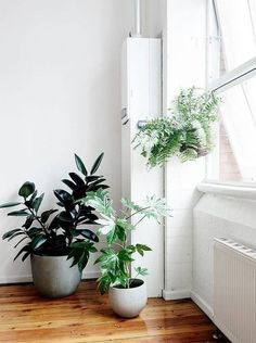 Add plants into an empty space to brighten it up. Banana leaves or snake plants fit into the season.