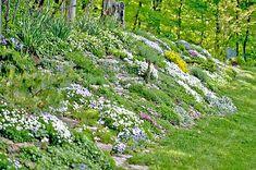 Simple Slopped Backyard Landscaping Slopped Backyard Landscaping Landscaping Ideas For Sloped Backyard Garden Design Ideas On A Landscaping On A Hill, Landscaping With Rocks, Landscaping Ideas, Steep Hillside Landscaping, Landscaping Software, Sloped Backyard Landscaping, Terraced Landscaping, Backyard Ideas, Landscaping Contractors
