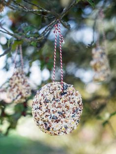 For the holidays, don't just decorate the Christmas tree inside your house. Make these birdseed ornaments to add color to bare winter trees and treat hungry feathered friends to a snack. This is a great project for kids and to give as gifts to your favorite nature lovers.