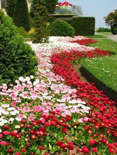Preciosas combinaciones de plantas y flores