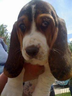 Puppy Maggie