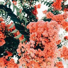 beautiful flowers names Bougainvillea, Wild Flowers, Beautiful Flowers, Plants Are Friends, No Rain, Flower Aesthetic, Mother Nature, Planting Flowers, Scenery