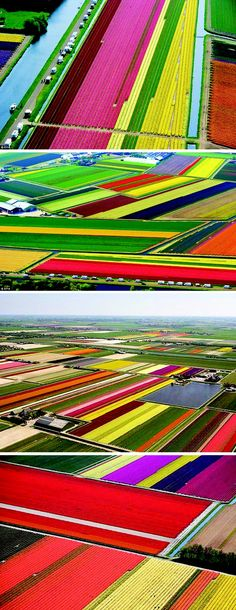 Holland. Flower (mostly Tulip) Fields It Amazing And Is Breathtaking From The Air!