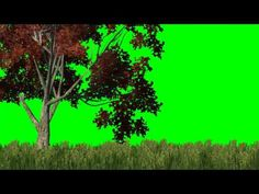 meadow with red tree in the wind - green screen effects - YouTube
