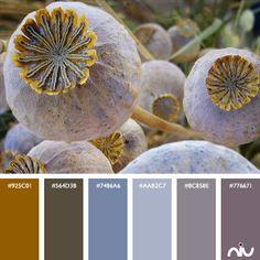 Cacti Color Palette