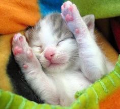 Sleepy Baby. Proof there is nothing cuter than a kitten:)