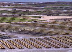 Parc à huitres, ostreiculture en baie de Paimpol, Trégor, Bretagne Nord, France