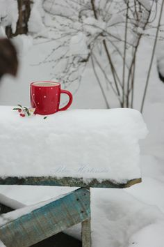 red cup and ... the fence color!  Heaven with my two favorite colors!  (oh, whoops ... love coral, too ... but think it is a shade of red, kinda)