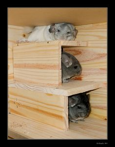 Bunkbeds...FOR MICE :) !