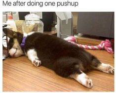 Funny Dog Pictures Dump of the Day - 12