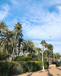 Sunny Spain ☀️🥰 Sunnies, Spain, Plants, Instagram, Sunglasses, Sevilla Spain, Shades, Plant, Planets