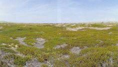 Stabile kalkfattige klitter med Empetrum nigrum. Kystklitter med dværgbuskvegetation (klithede). . Klithede, Nymindegab, Vestjylland. Foto: Bert Wiklund.  Vegetationen er domineret af revling, lyng eller andre dværgbuske på gamle kystklitter. Ofte er klitterne lave og jævne. Sandet er kalkfattigt grundet lang tids udvaskning.  Udbredelse. Naturtypen findes hovedsageligt langs Jyllands nord- og vestkyst. Eksempler på naturtypen findes på Skagen, Hulsig Hede syd for Skagen, Læsø og Hanstholm…
