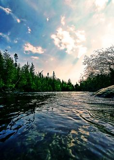 Au Sable River, MI. Loved going canoeing down this