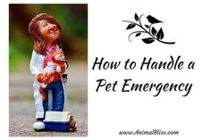 Would you know how to handle a pet emergency after your dog or cat is injured? Quickly understanding what to do could save your pet's life. Cute Dog Photos, Animal Nutrition, Dog Safety, Dog Care Tips, Pet Life, Cat Lover Gifts, Pet Health, Pet Dogs, Your Pet