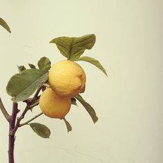 lemon Photo by @Jonathan Nafarrete Lo / happymundane on Instagram