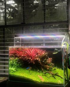 """335 lượt thích, 6 bình luận - Mitch Mazur (@afishionado) trên Instagram: """"Cold and wet today in Austin. #plantedaquarium #plantedtank #natureaquarium #nature #plant…"""""""