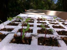 Con poco tiempo las plantitas comenzaron a crecer