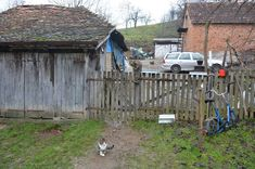 Village Ljutice in Serbia, cats are unavoidable in the yard, they have their own role