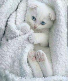 OMG so cute!