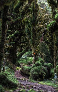 'A track in the forest at cloud level on the Kapakapanui track, New Zealand.' Forest Track by Ashley Francis on 500px