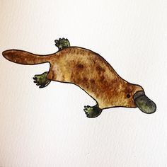 D is for Duckbilled platypus. They don't need any factoids. They're platypus…