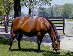 Natalma. The dam of Northern Dancer was sired by Native Dancer, out of Almahmoud by Mahmoud. Natalma became a very productive and influential broodmare with her grand daughters passing on the magic by producing world class sires Danehill and Machiavellian. ND was her first foal.