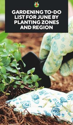 Gardening To-Do List for June by Planting Zones and Region