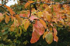 Up Close and Seasonal  #WinkworthArboretum  23 October 2015  https://www.pinterest.com/annbri/