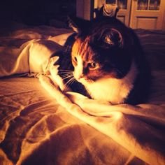 #gatto so #cute