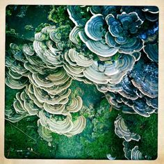 MSMITHPHOTO, Fungi. I've wanted to take some pics of this for...