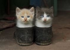 You've heard of puss in Boots? Here's Kittens in shoes...