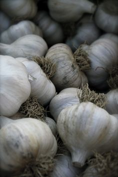 Garlic Bulbs - Natures antibiotic.  What a gift!