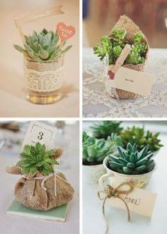 souvenirs-con-plantas-suculentas