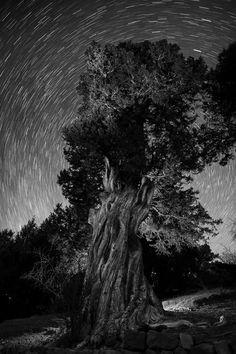 Sabinas y estrellas by CovaNegra , via Behance