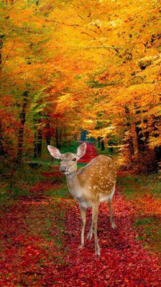 Foto Nature, Image Nature, Beautiful World, Animals Beautiful, Cute Animals, Autumn Scenes, Tier Fotos, Fall Pictures, Jolie Photo