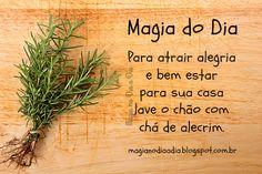 Magia no Dia a Dia: Magia do Dia: alecrim