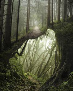 Fotografia - Manipolazione digitale di Justin Peters (Germania)