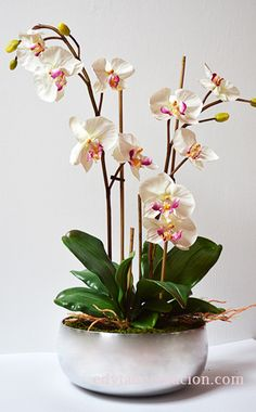 How To Keep Orchids Alive And Looking Gorgeous E Flowers, Pretty Flowers, Flower Pots, Planting Flowers, Orchid Flower Arrangements, Christmas Flower Arrangements, Ikebana, Orchid Pot, Beautiful Flowers Pictures