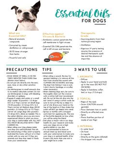 Essential Oils for Dogs Tear Pad