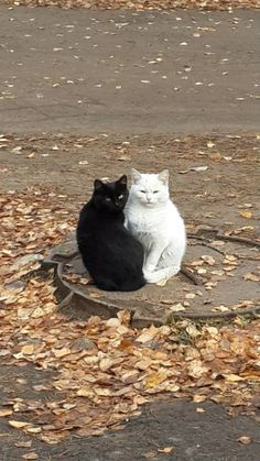 Are they called Yin and Yang ?