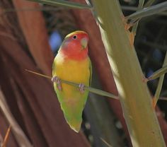 lovebirds 96 | Flickr - Photo Sharing!