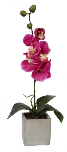 Orchidée 1 branche avec Pot effet ciment sur Jardindeco