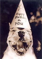 smiling pit in a party hat, happy birthday to you!