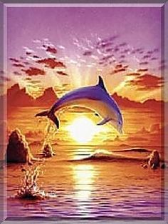 dolphin pictures sunset - Google Search
