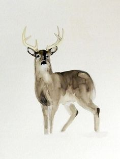 Original Watercolor PaintingWhitetailed Deer by jasonpaints1, $20.00