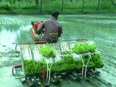 Mesin-mesin pertanian untuk menanam padi di sawah   Berbagi Tak Pernah Rugi